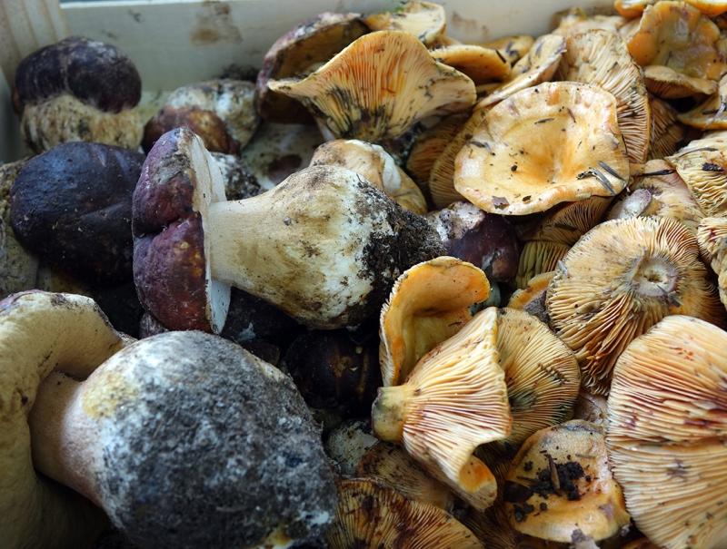Algunos de los manjares micológicos que se pueden degustar en Cercedilla durante el otoño.