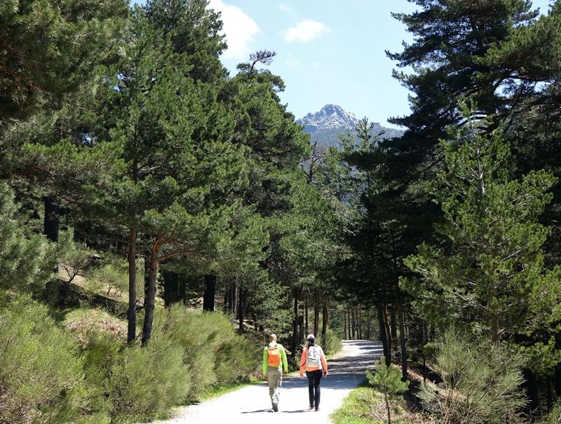 Uno de los senderos del Valle de la Fuenfría.